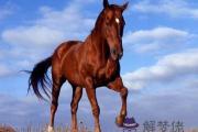 2012年11月11日屬馬的人運程