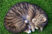 做夢夢到貓什麽意思