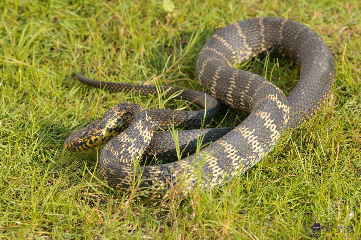 夢見蛇是什麽意思